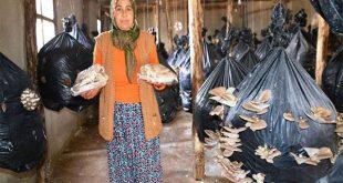ev hanımı devlet destekli hibe