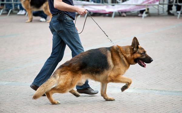 köpek gezdiriciliği